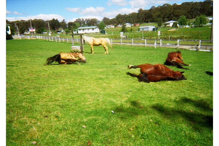 The horses were tired after a long day too